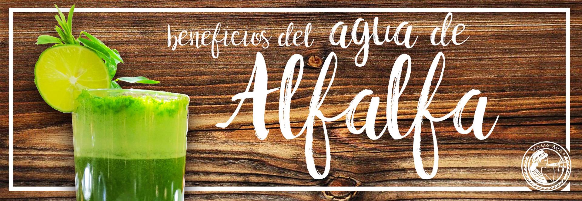 alfalfa MAMA MIA San Miguel de Allende