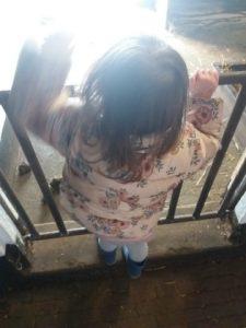 Dagboek kinderboerderij varkentjes kijken
