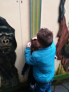 meten bij de apen ouwehands dierenpark Rhenen