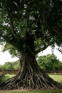 L'arbre image de l'ancrage