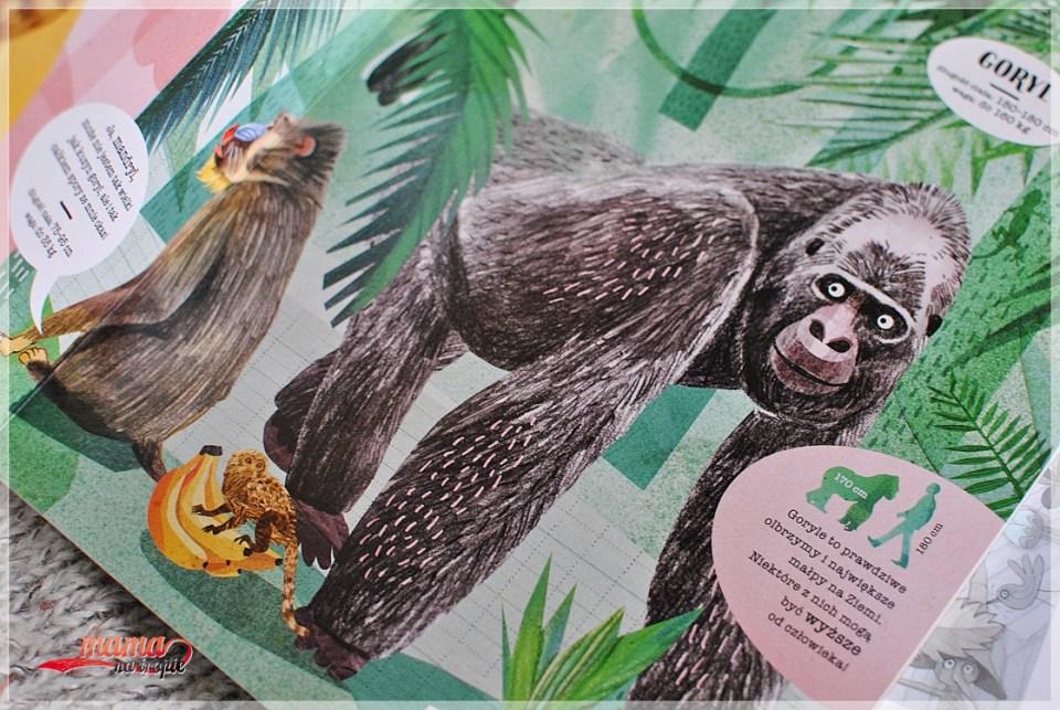w świecie małp, książka dla dzieci, książka całokartonowa, nasza księgarnia