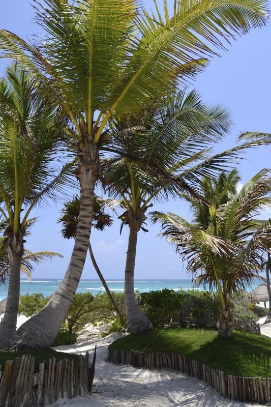 tulum-palmiers