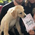 points communs chien enfant