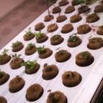 evolucion hidroponico ikea