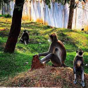 monos polonnaruwa