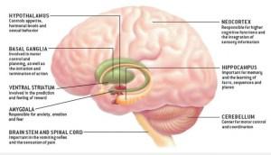Tumor Otak Deteksi Sejak Dini Maman Malmsteen