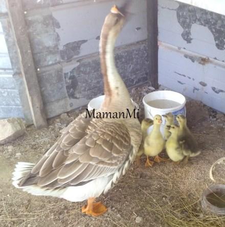 mamanmi-blog-maman-quotidien mai2018 20.jpg