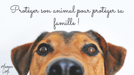 Protéger son animal pour protéger sa famille !