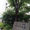 台東区永寿総合病院産婦人科での出産レポ!その1初診〜妊婦健診編