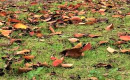 落ち葉のイメージ