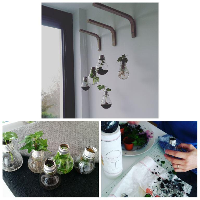 des plantes dans des ampoules