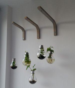 plantes dans des ampoules