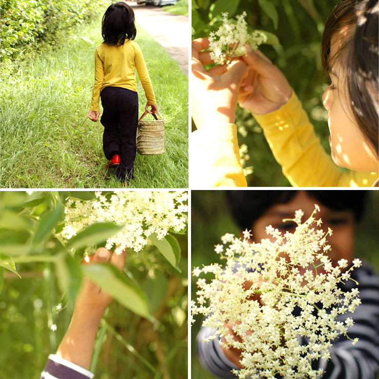 Foraging for Elderflowers from Mamanushka.com