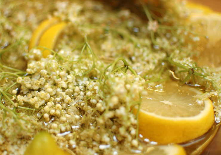Elderflower Cordial Infusion from Mamanushka.com