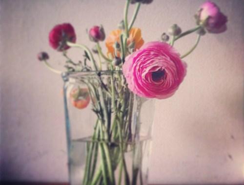 mamanushka.com:: ranunculus flowers