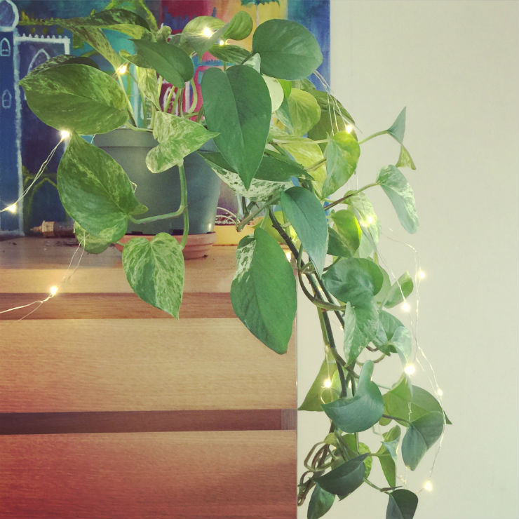 pothos-house-plant-via-mamanushka-blog