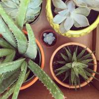 Five EASY Plants, That Will Purify Your Air, Look Good & Make You Feel Awesome
