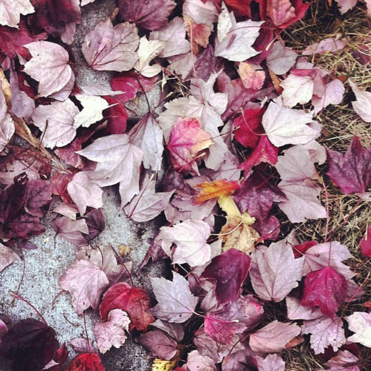 fall-autumn-fav-things-leaves-like-blossoms-via-mamanushka-blog