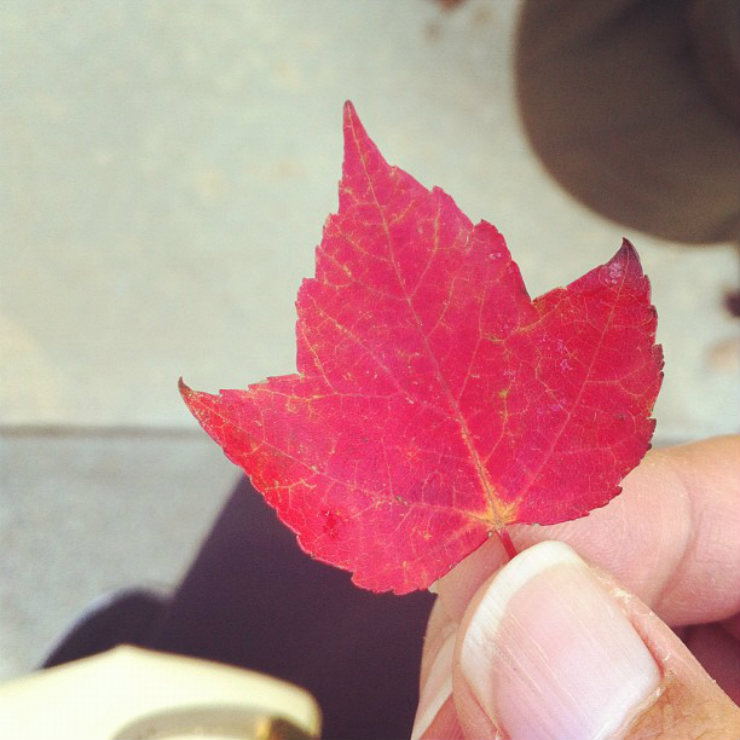 fall-autumn-fav-things-tiny-leaf-via-mamanushka-blog