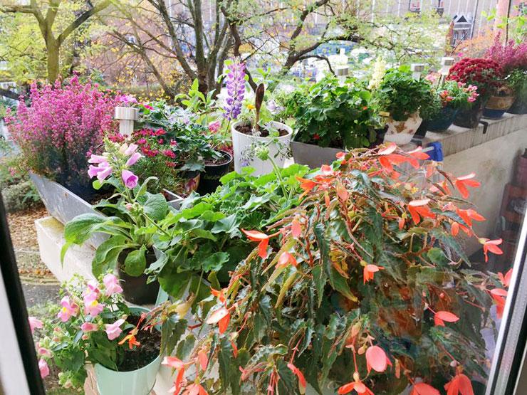 MAMANUSHKA.com    From Plant Killer to Glorious Garden Addict    Easy Plants For Beginners    Urban Garden