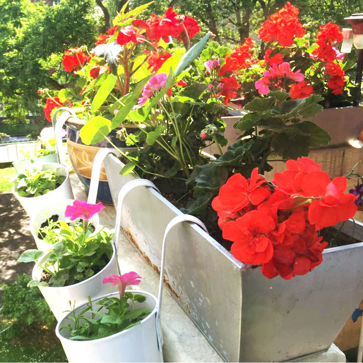 A Foolproof Guide to Growing an Absolutely Glorious Container Garden
