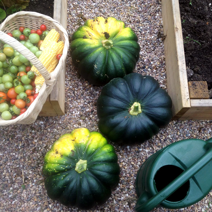 MAMANUSHKA.com    How To Plant An Edible Garden    Easy Guide to Growing Your Own Fruit & Vegetables    Crown Squash