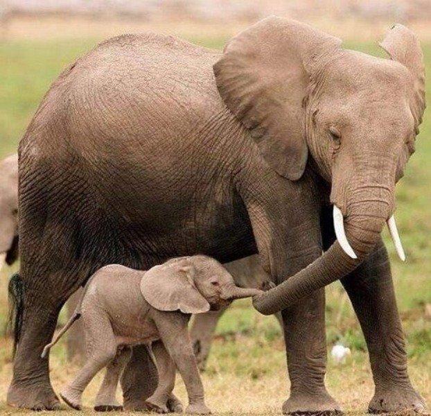 mama slon