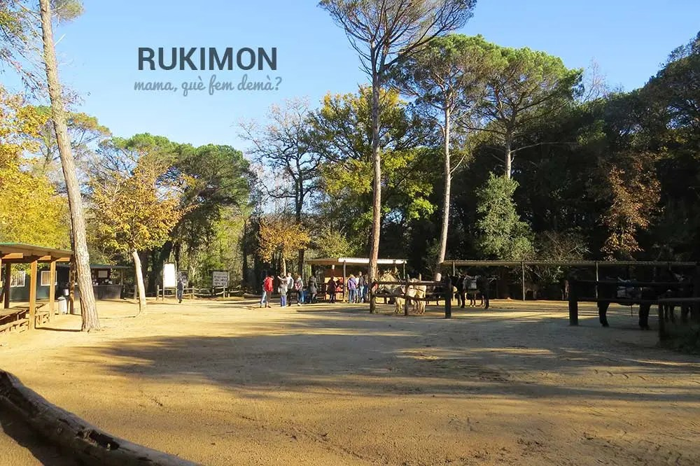 Vista global de Rukimon