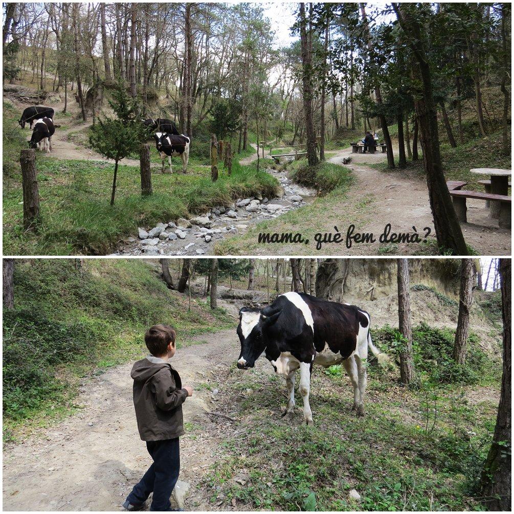 Vacas en El Bosc Encantat de Gurb