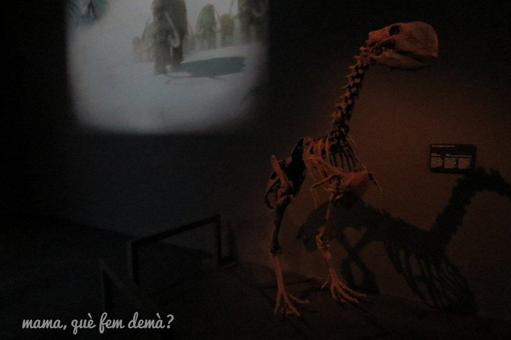 museublau11