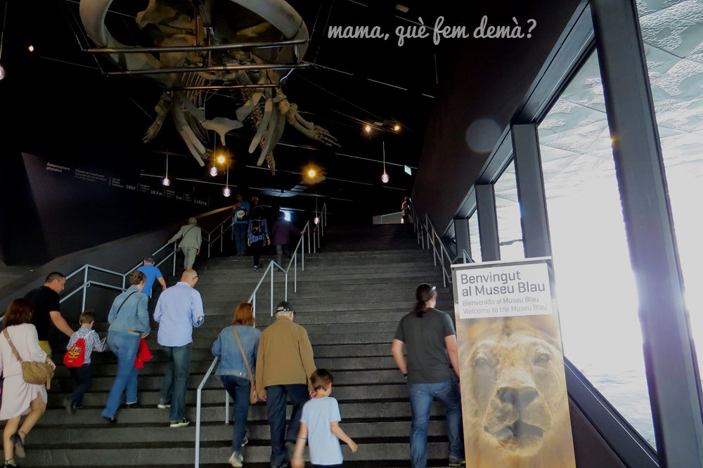 museublau13