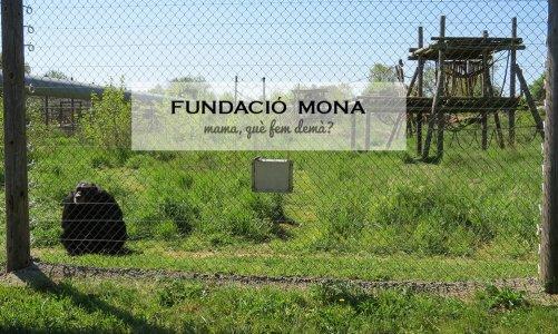 Visitamos los chimpancés y macacos de la Fundació MONA
