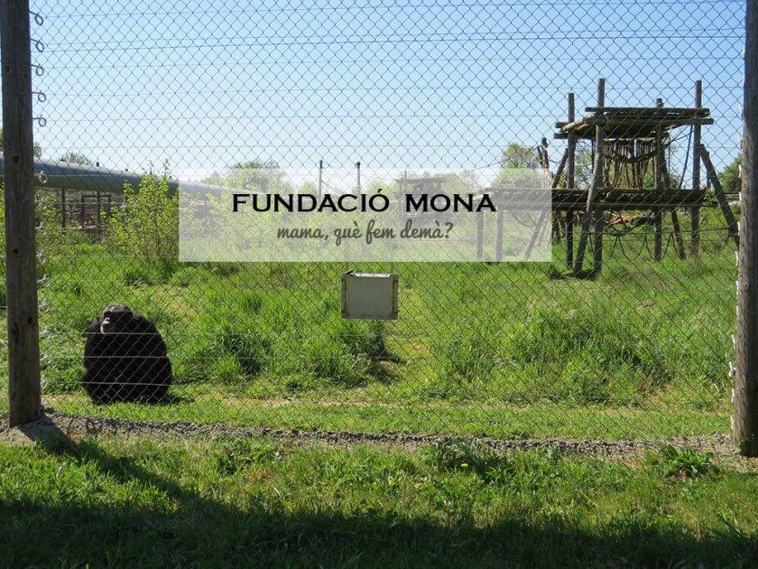 fundació_mona00