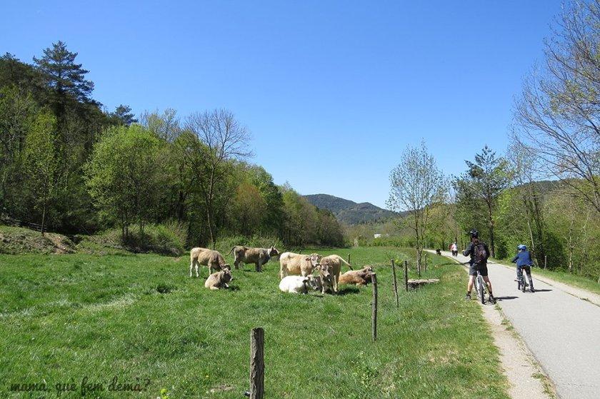 En bicicleta por la Ruta del Ferro i del Carbó, Ripoll-Sant Joan de les Abadesses