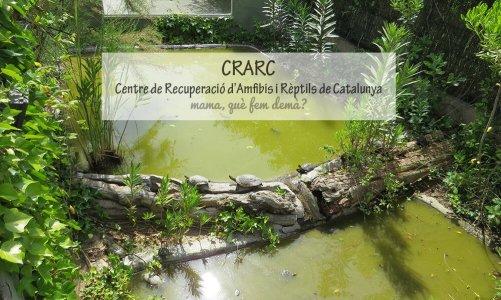 CRARC, el Centre de Recuperació d'Amfibis i Rèptils de Catalunya