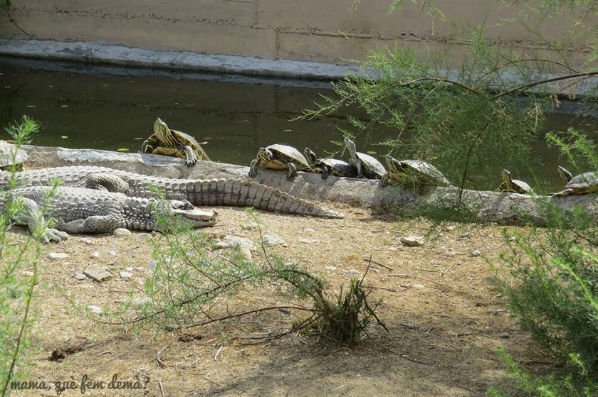 Tortugas y caimanes en el CRARC