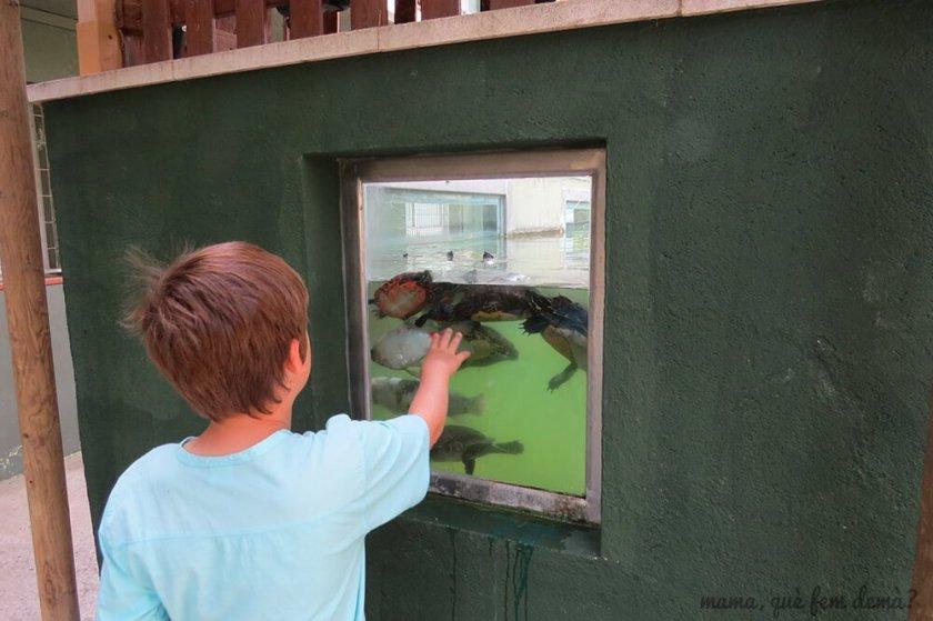 tortugas exóticas y carpas en el CRARC