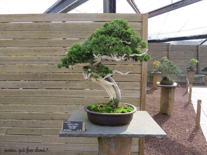 jardi_botanic14