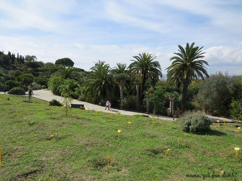 jardi_botanic15