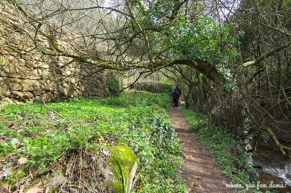 excursión arbres de Vallcàrquera en el Figaró