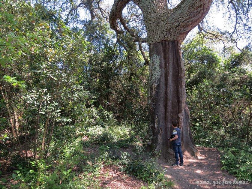 Suro de l'Almeda en la excursión del gegants del bosc i la cova d'en Daina