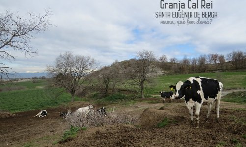 Las vacas lecheras de la Granja Cal Rei