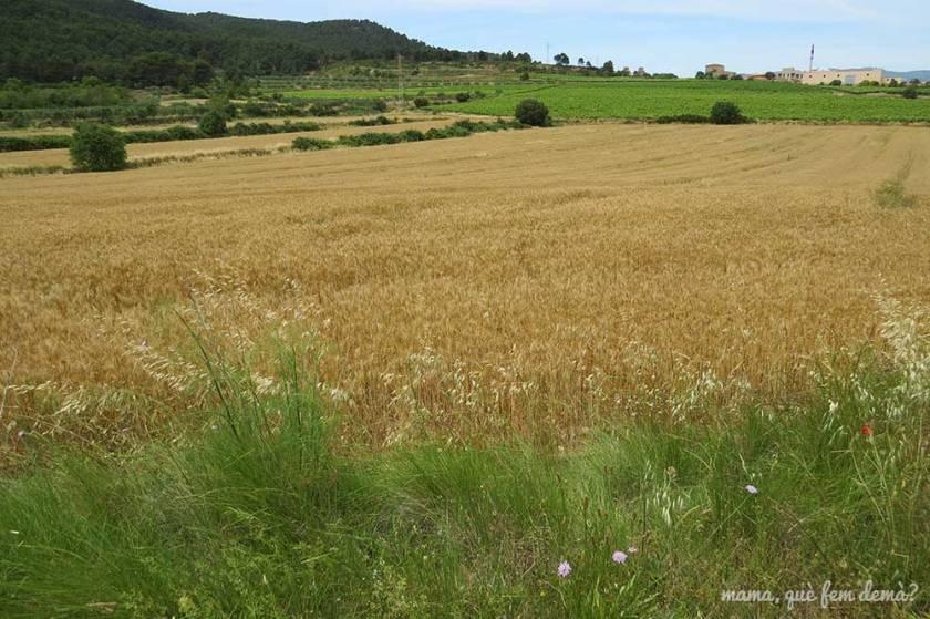 campos de cereales en montblanc