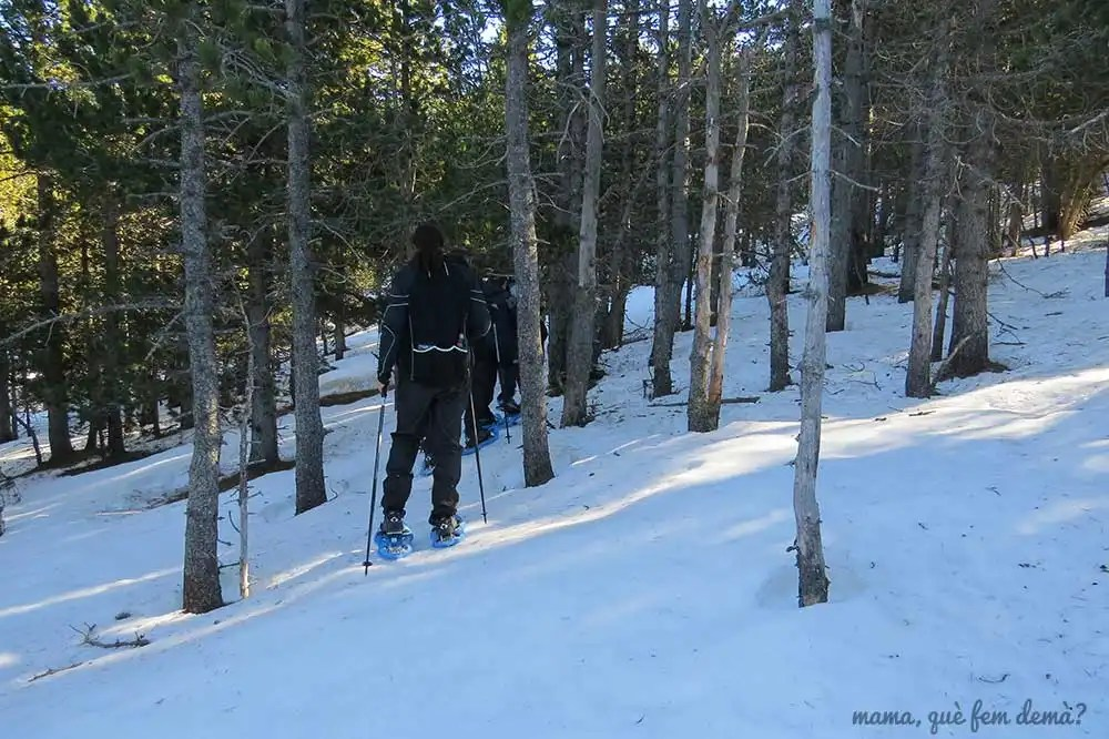 Personas con raquetas de nieve pasando por un bosque en Rasos de Peguera