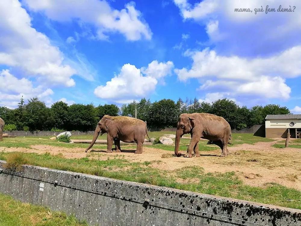 elefantes en Givskud Zoo