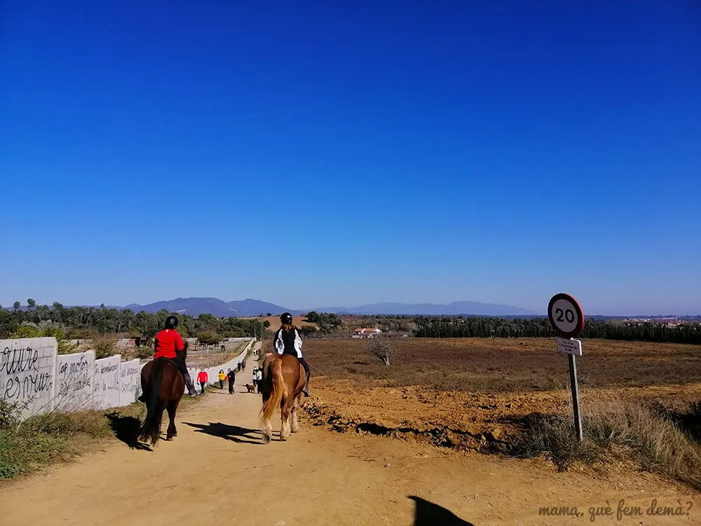 caballos de la hípica en el camino de Mas Canals