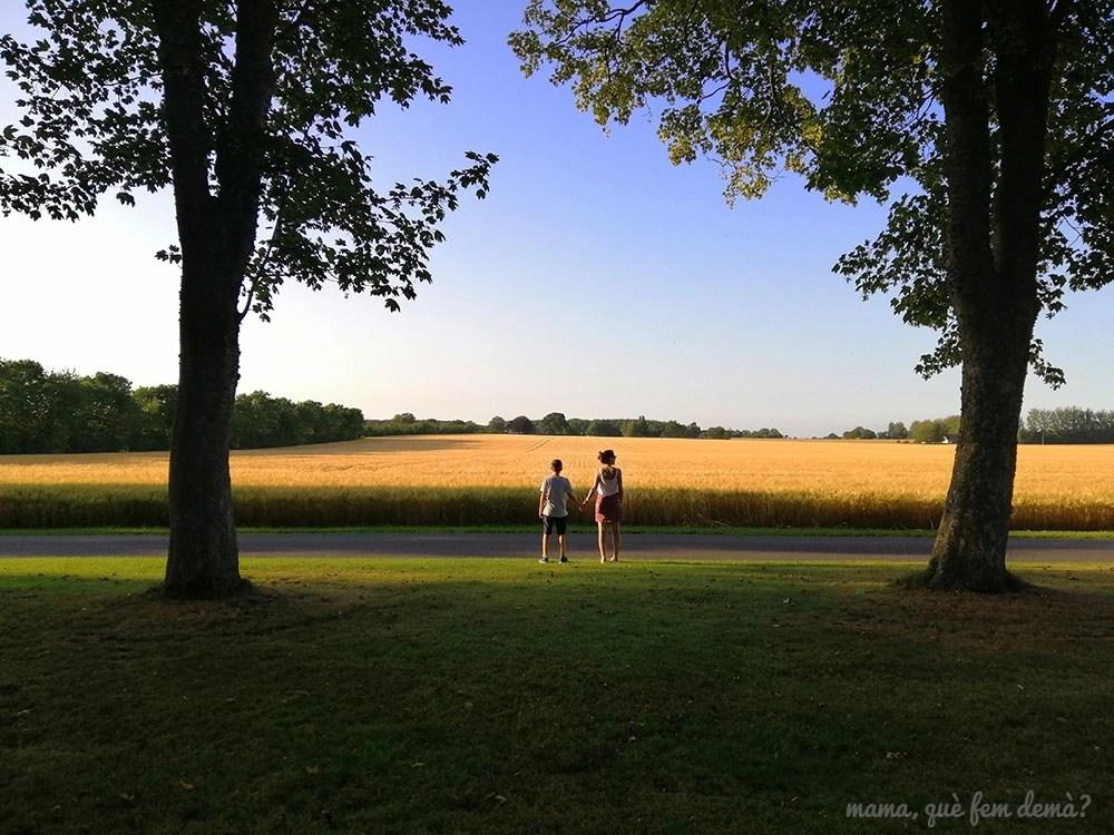 campos de trigo delante de la granja Agernæsgaarden en Dinamarca