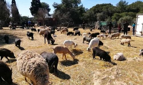 El refugio de animales Món La Bassa, en el Vendrell