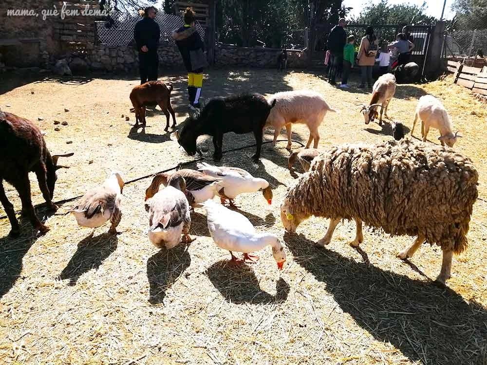 Ovejas, cabras y ocas en Món La Bassa