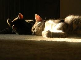 sun.... sleepy